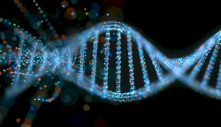 دی ان ای (DNA) چیست و چه کاربردی در بدن انسان دارد